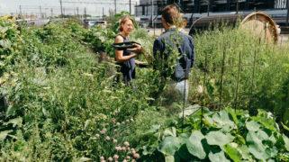 Tijdens Spring House Academy leerden we over wat er zoal groeit in de tuin van Choux.